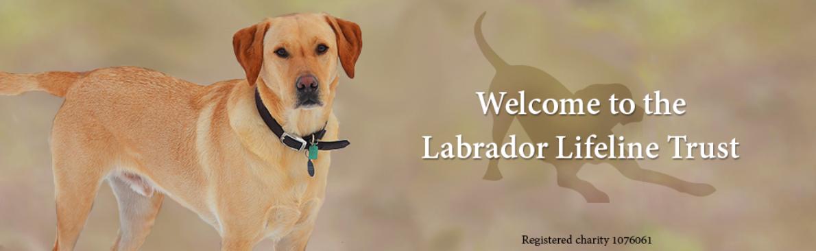 Rehome a Labrador - The Labrador Lifeline Trust